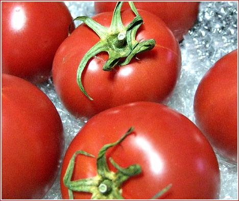 【1粒千円!徳谷トマト】フルーツトマトの最高級ブランドは、トマトらしい味わいが凝縮されたものすご
